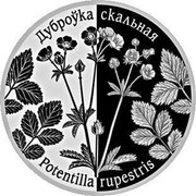Belarus 1 Rouble Potentilla Rupestris 2017 Proof-like ДУБРОЎКА СКАЛЬНАЯ POTENTILLA RUPESTRIS coin reverse