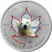 Canada 5 Dollars Polar Bear Cub 2016 CANADA 9999 9999 FINE SILVER 1 OZ ARGENT PUR LITTLE WILD ONES coin reverse