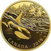 Canada 30 Dollars (Orca and Sea Lions) CANADA • 2019 coin reverse