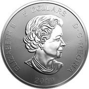 Canada 5 Dollars Grizzly bear 2019 ELIZABETH II 5 DOLLARS D • G • REGINA SB 2019 coin obverse