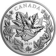 Canada 50 Dollars (Douglas Maple Leaves) CANADA 2020 coin reverse